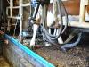 Kuh beim melken