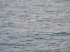 Delphine begleiteten die Fähre