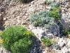 Pflanzen neben dem Aufstiegspfad