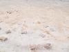 der Rand des Salzsees